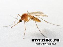 Защита от укусов насекомых
