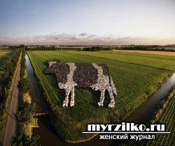 Заведите «корову»